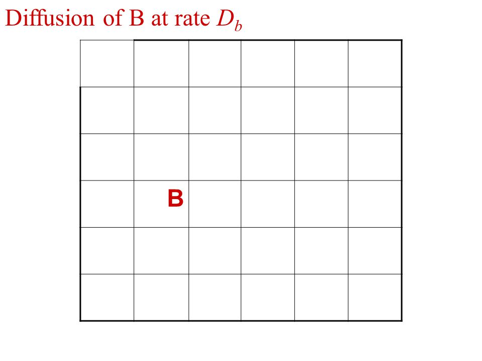 B Diffusion of B at rate D b