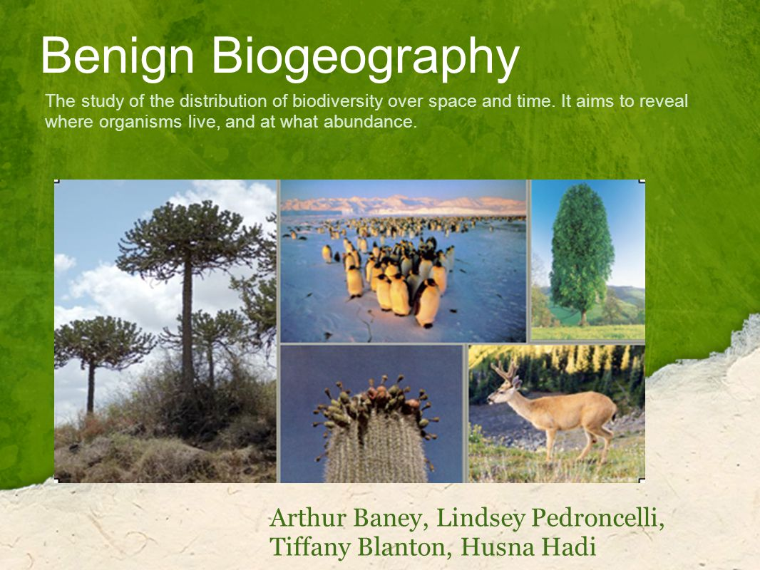 Benign Biogeography Arthur Baney, Lindsey Pedroncelli, Tiffany Blanton, Husna Hadi The study of the distribution of biodiversity over space and time.