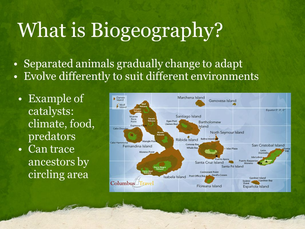 What is Biogeography.