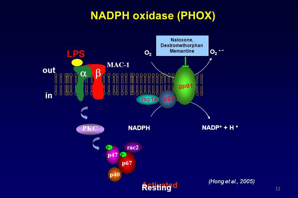 NADPH oxidase (PHOX) Activated O2O2 O2 –O2 – NADPH NADP + + H + Resting gp91 p22 rap1a p40 p47 rac2 p67  MAC-1 LPS out in PKC P P Naloxone, Dextrome