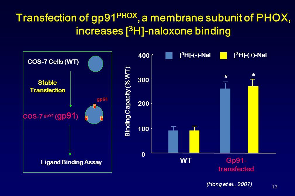 Transfection of gp91 PHOX, a membrane subunit of PHOX, increases [ 3 H]-naloxone binding 0 100 200 300 [ 3 H]-(-)-Nal Binding Capacity (% WT) WT [ 3 H