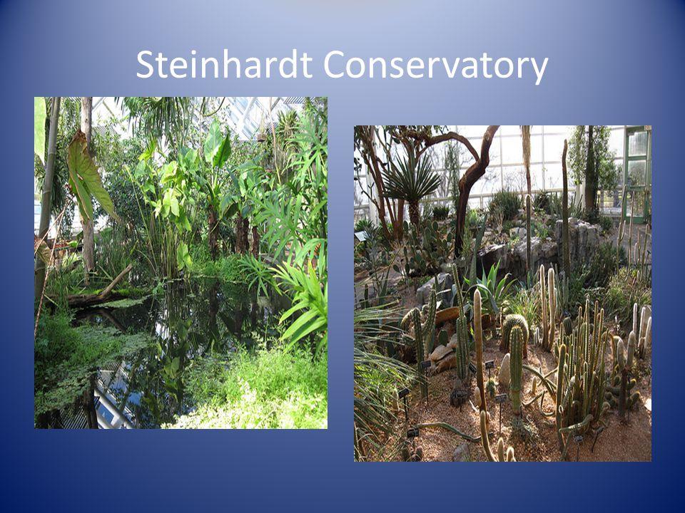Steinhardt Conservatory