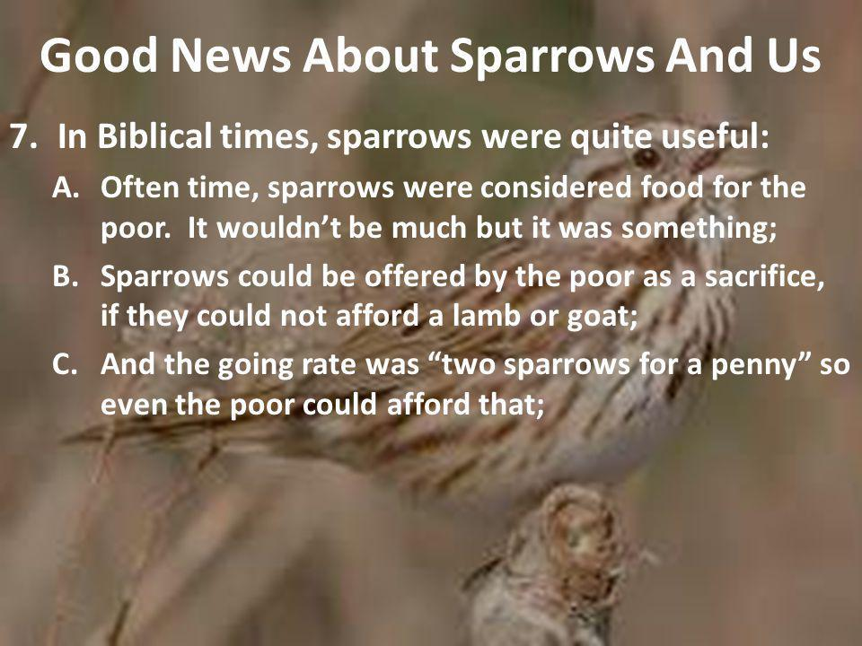 Good News About Sparrows And Us 7.In Biblical times, sparrows were quite useful: A.Often time, sparrows were considered food for the poor.