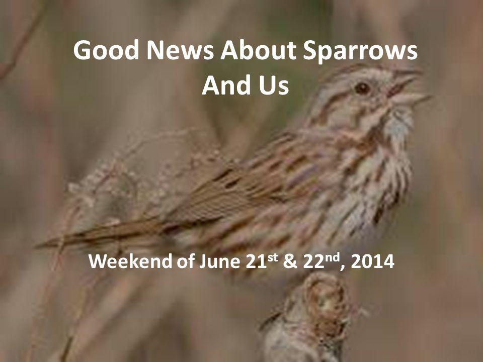 Good News About Sparrows And Us Weekend of June 21 st & 22 nd, 2014