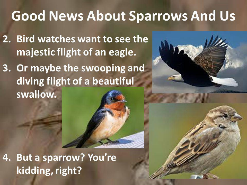 Good News About Sparrows And Us 5.And yet from the thousands of bird species, our Lord chose the most insignificant, least-watched and scruffiest bird of all.