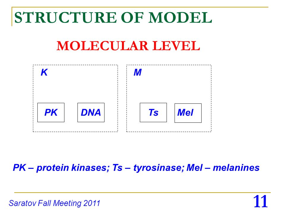 11 Saratov Fall Meeting 2011 MOLECULAR LEVEL STRUCTURE OF MODEL KM TsPKDNAMel PK – protein kinases; Ts – tyrosinase; Mel – melanines