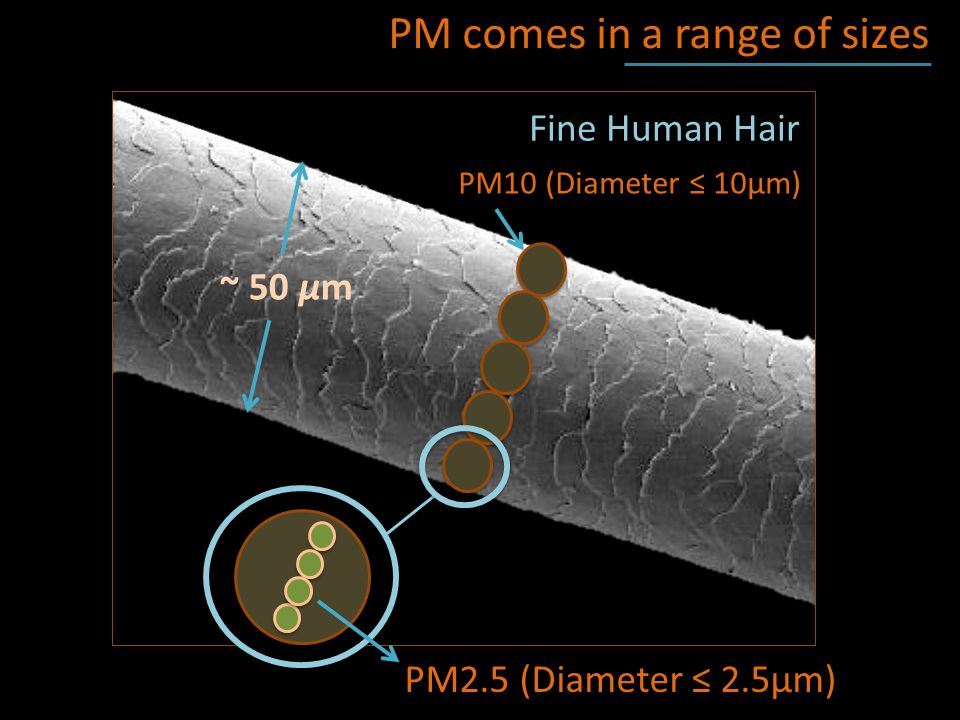 Fine Human Hair PM comes in a range of sizes PM10 (Diameter ≤ 10μm) PM2.5 (Diameter ≤ 2.5μm) ~ 50 μm