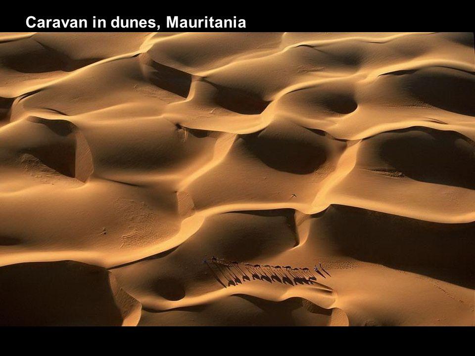 Caravan in dunes, Mauritania