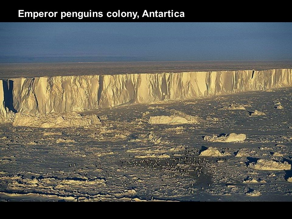 Emperor penguins colony, Antartica