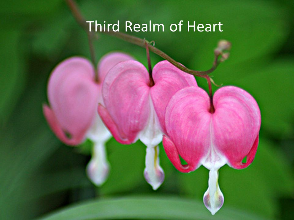 Third Realm of Heart