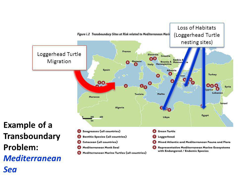 + Example of a Transboundary Problem: Mediterranean Sea Loss of Habitats (Loggerhead Turtle nesting sites) Loggerhead Turtle Migration
