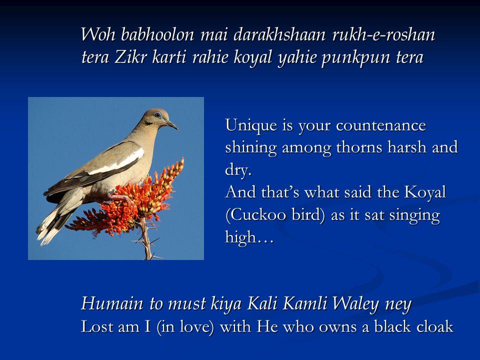 Woh babhoolon mai darakhshaan rukh-e-roshan tera Zikr karti rahie koyal yahie punkpun tera Unique is your countenance shining among thorns harsh and dry.