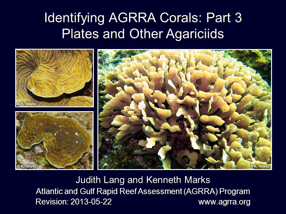 A. fragilis U. agaricites U. humilis AFRA UAGA UHUM Which is Which?