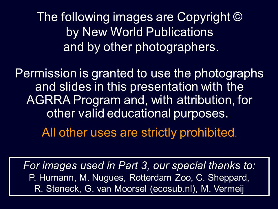The following images are Copyright © by New World Publications and by other photographers.