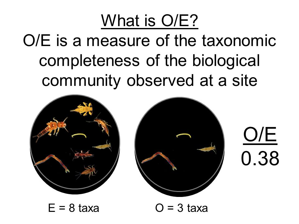 What is O/E.