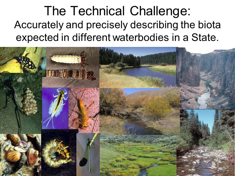 The Technical Challenge: Accurately and precisely describing the biota expected in different waterbodies in a State.