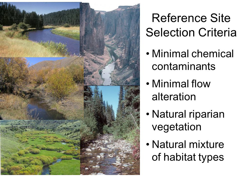 Reference Site Selection Criteria Minimal chemical contaminants Minimal flow alteration Natural riparian vegetation Natural mixture of habitat types