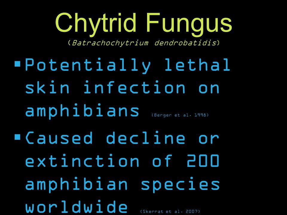 Chytrid Fungus (Batrachochytrium dendrobatidis)  Potentially lethal skin infection on amphibians (Berger et al. 1998)  Caused decline or extinction
