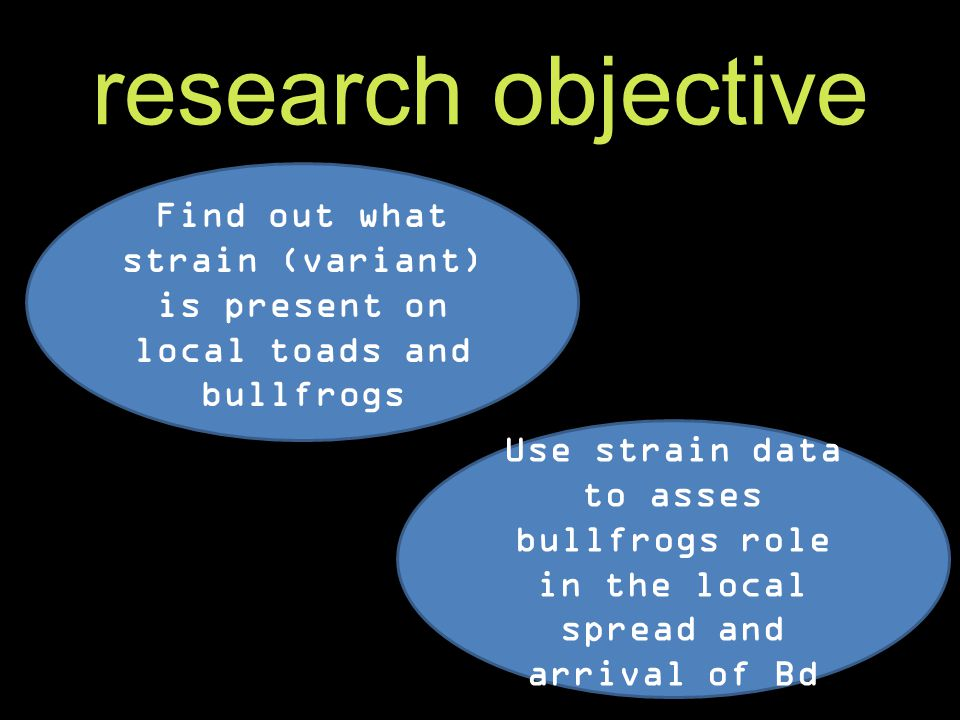 research objective Look for Bd on Western Toads and American bullfrogs in Nanaimo Sequence Bd strains found on toads and bullfrogs to determine the possibility of between-species transfer.