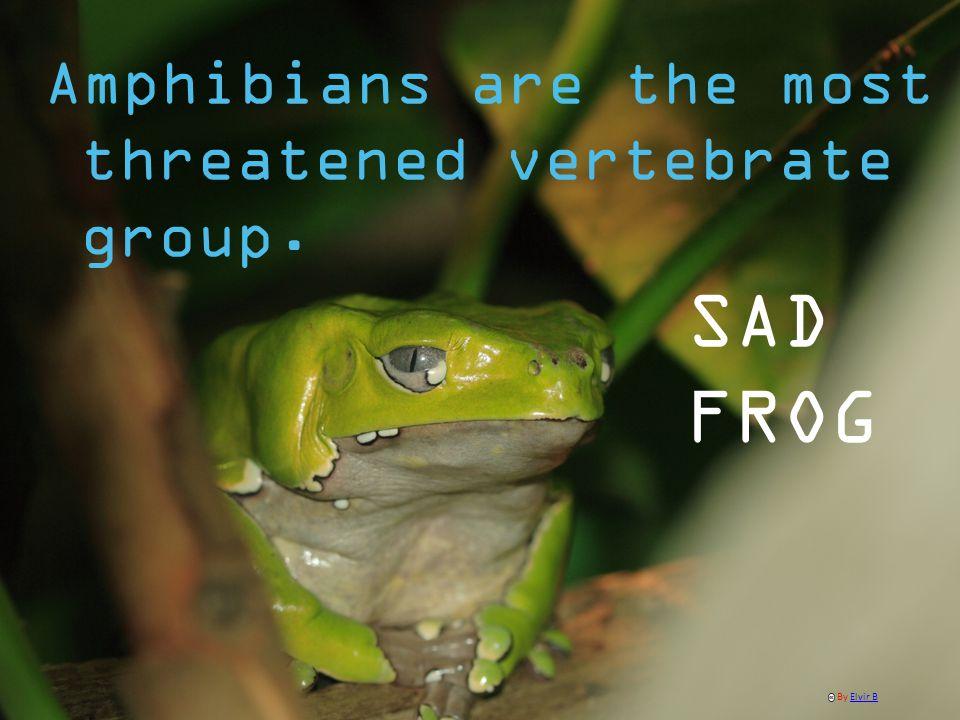 Amphibians are the most threatened vertebrate group. SAD FROG By Elvir BElvir B
