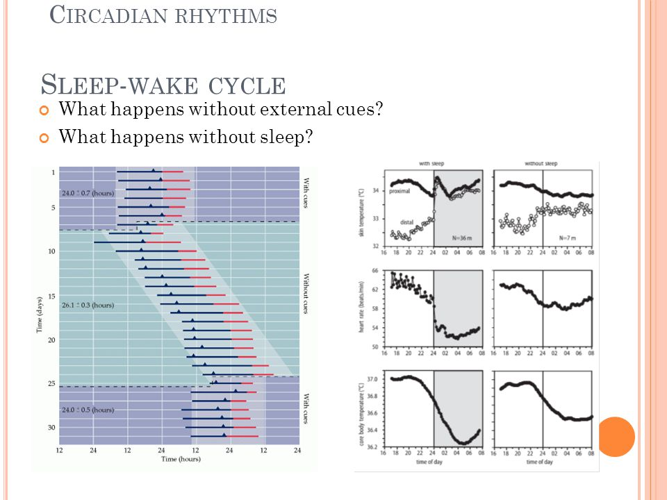 S LEEP - WAKE CYCLE What happens without external cues.