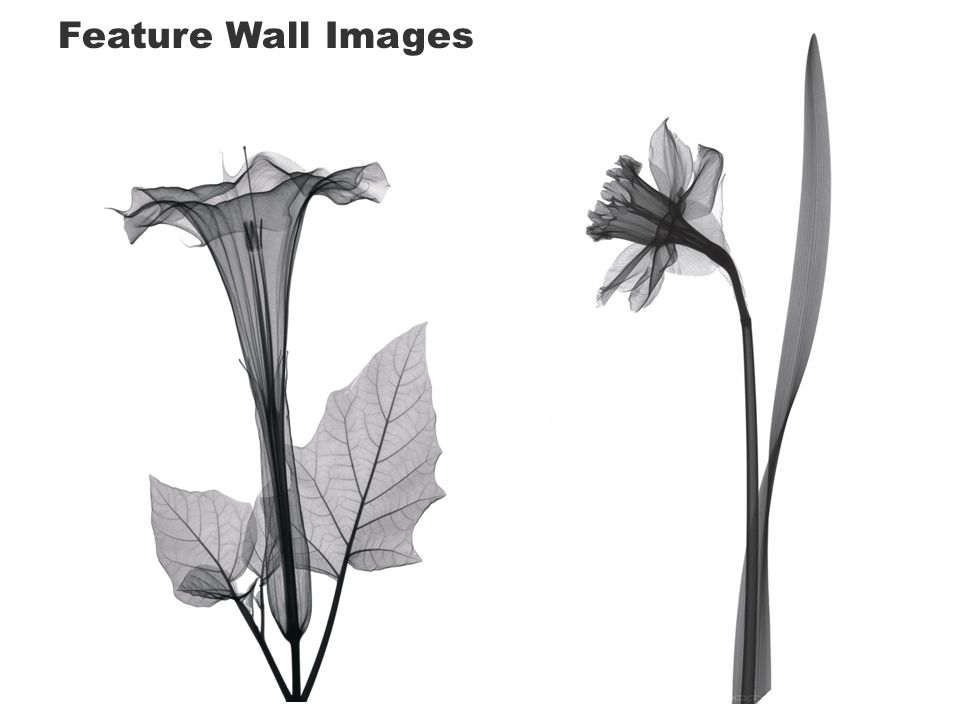 Feature Wall Images