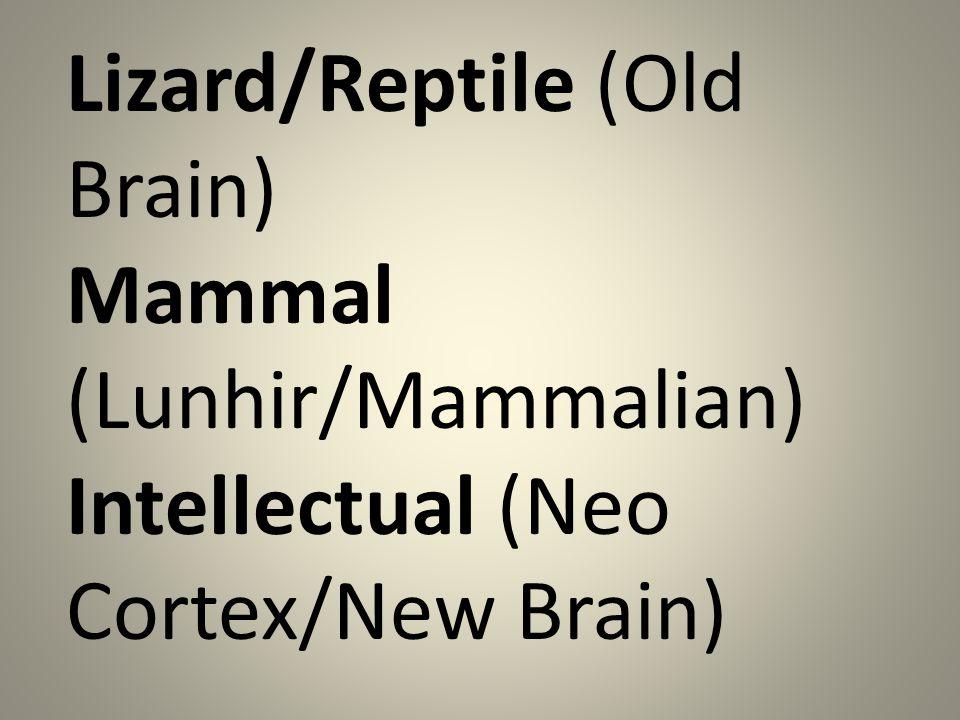 Lizard/Reptile (Old Brain) Mammal (Lunhir/Mammalian) Intellectual (Neo Cortex/New Brain)