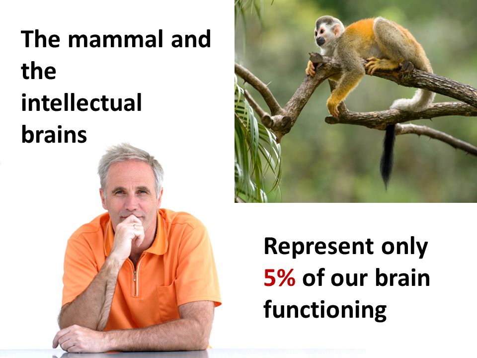 The mammal and the intellectual brains Represent only 5% of our brain functioning