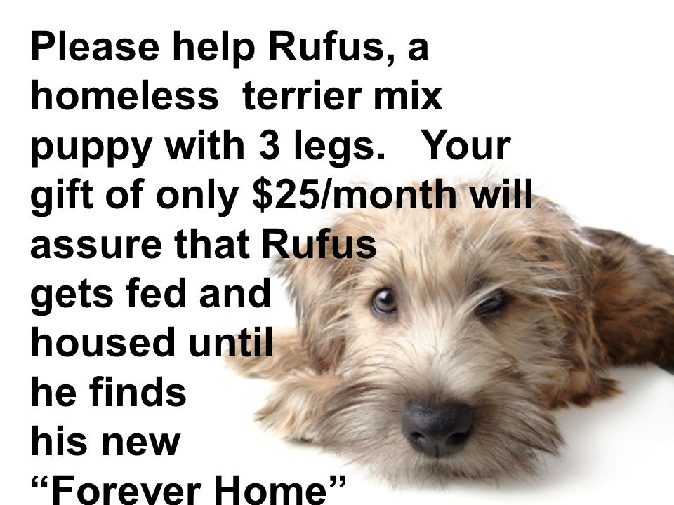 Please help Rufus, a homeless terrier mix puppy with 3 legs. Your gift of only $25/month will assure that Rufus gets fed and housed until he finds his