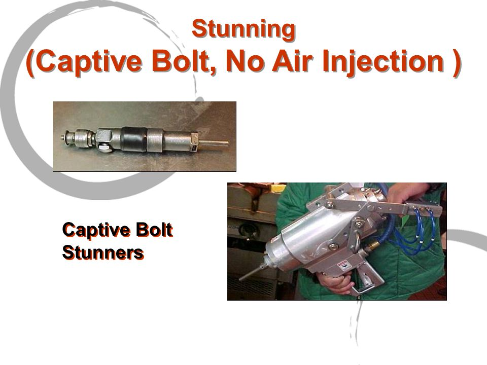 Stunning (Captive Bolt, No Air Injection ) Captive Bolt Stunners