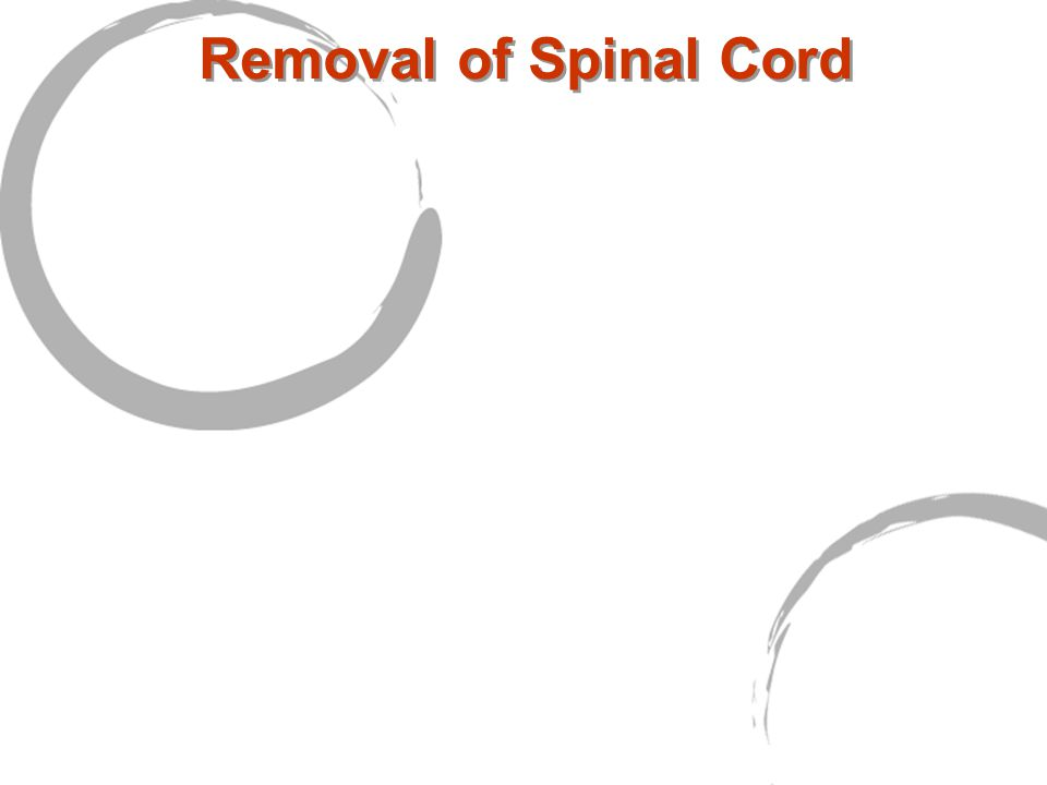 Removal of Spinal Cord