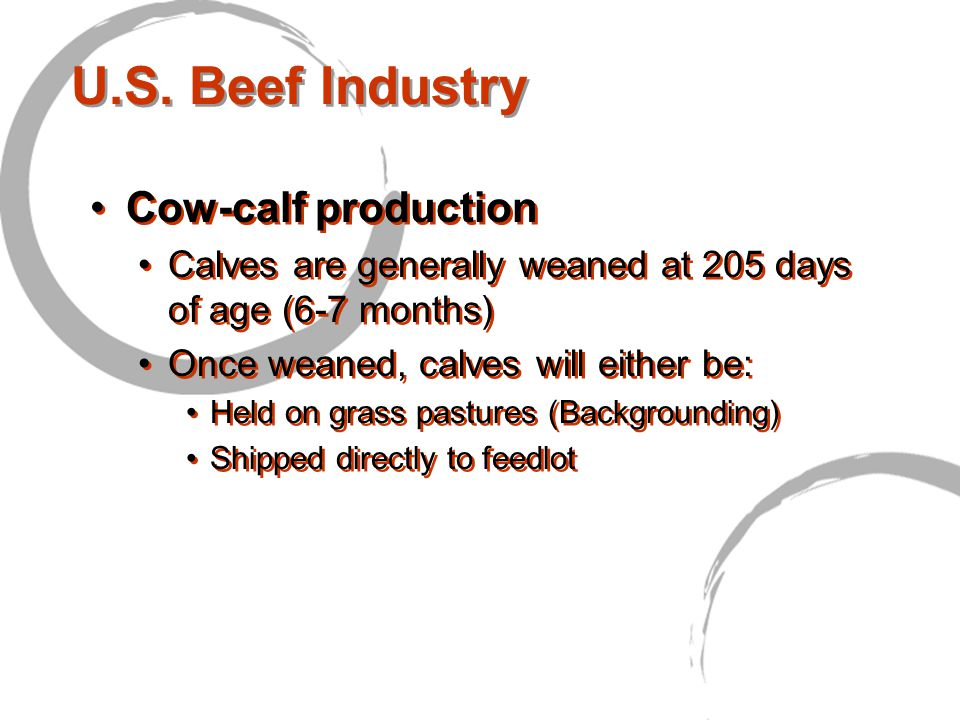 U.S. Beef Industry Cow-calf production Calves are generally weaned at 205 days of age (6-7 months) Once weaned, calves will either be: Held on grass p
