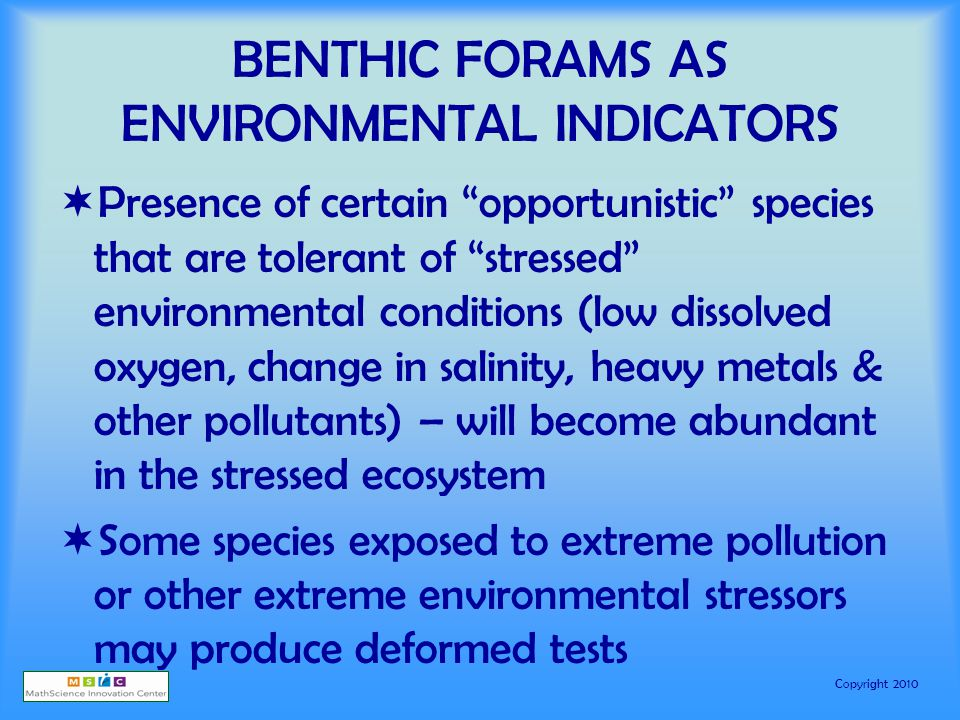 Copyright 2010 BENTHIC FORAMS AS ENVIRONMENTAL INDICATORS  Presence of certain opportunistic species that are tolerant of stressed environmental conditions (low dissolved oxygen, change in salinity, heavy metals & other pollutants) – will become abundant in the stressed ecosystem  Some species exposed to extreme pollution or other extreme environmental stressors may produce deformed tests