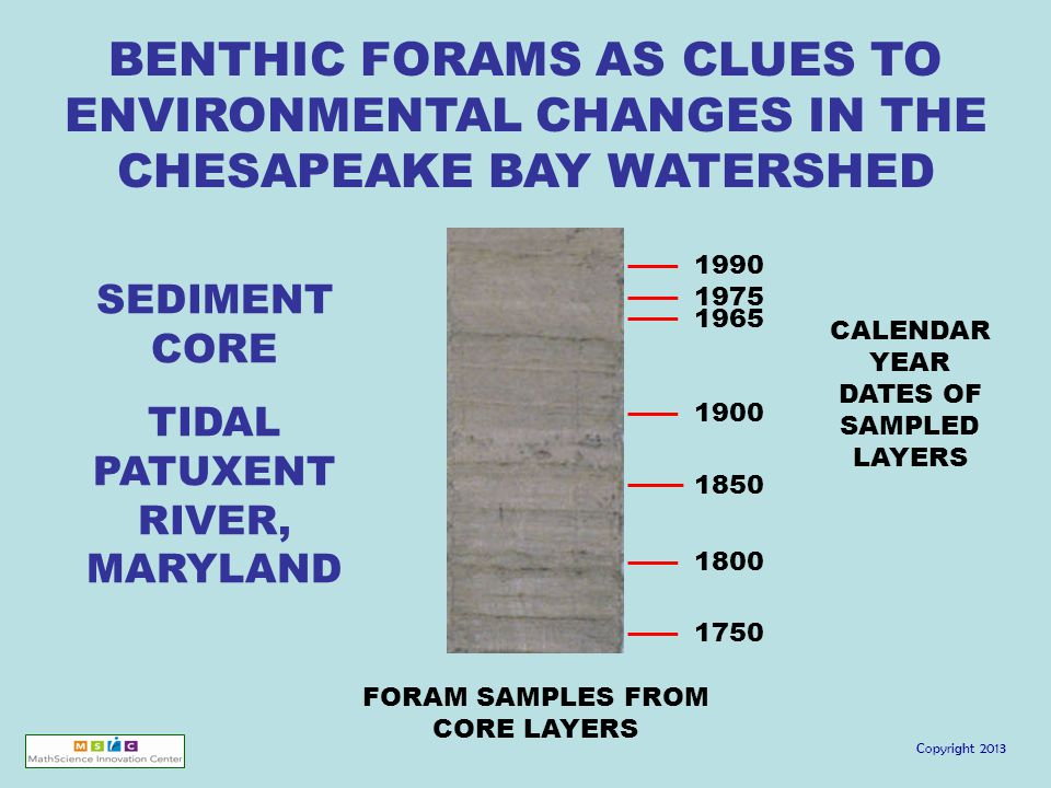 Copyright 2013 SEDIMENT CORE TIDAL PATUXENT RIVER, MARYLAND BENTHIC FORAMS AS CLUES TO ENVIRONMENTAL CHANGES IN THE CHESAPEAKE BAY WATERSHED FORAM SAMPLES FROM CORE LAYERS 1990 1975 1965 1900 1850 1800 1750 CALENDAR YEAR DATES OF SAMPLED LAYERS