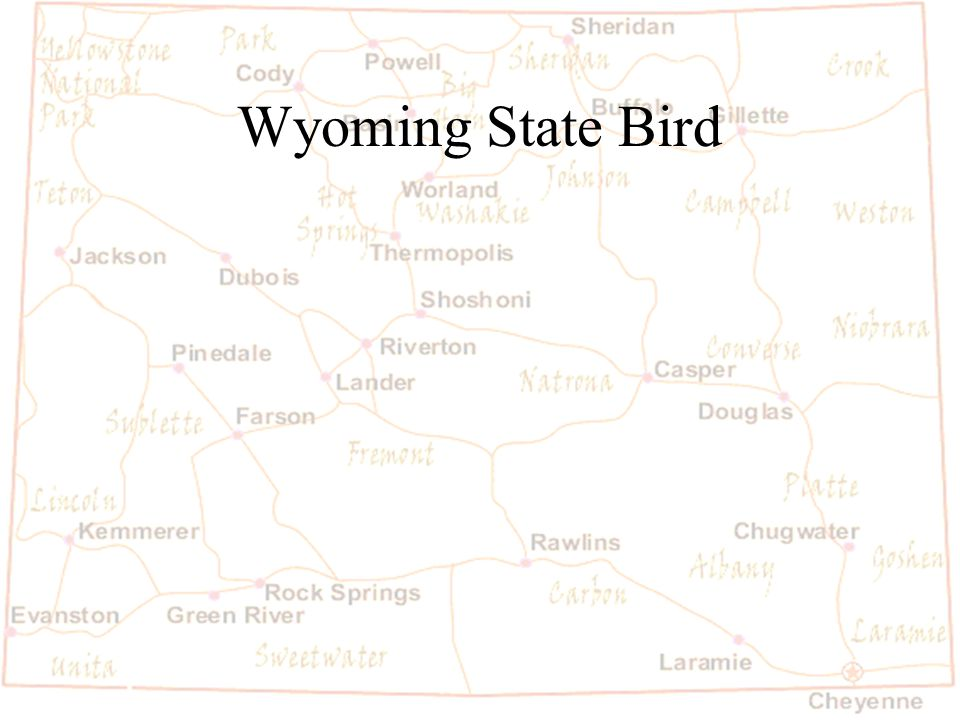 Barb Austin LCSD#1 Wyoming State Bird