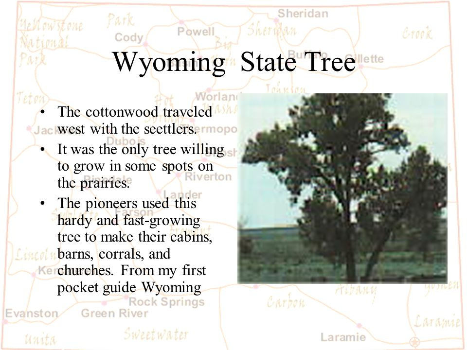 Barb Austin LCSD#1 Wyoming Agriculture Wyoming has about 9,000farms and ranches.