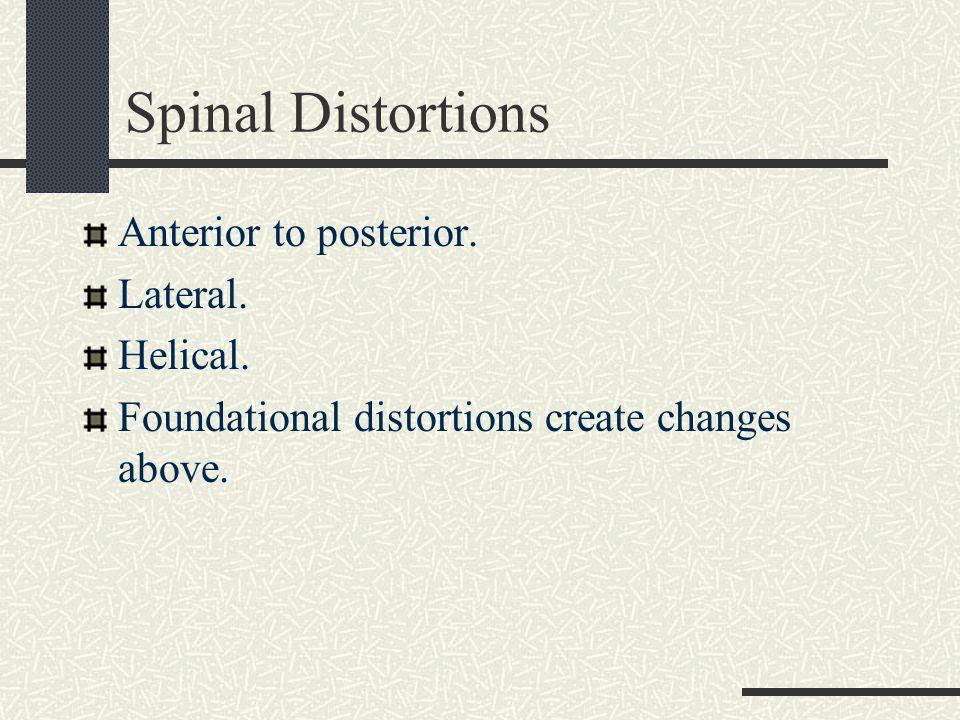 Spinal Column Views