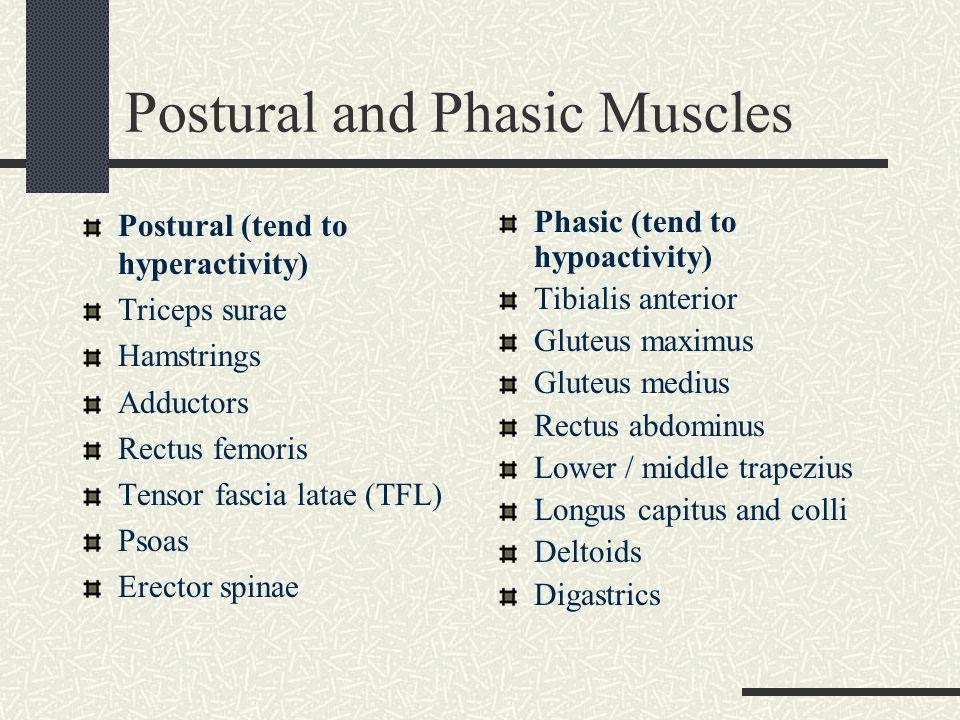 Postural and Phasic Muscles Postural (tend to hyperactivity) Quadratus lumborum (QL) Pectoralis Upper Trapezius Sternocleidomastoid Suboccipital Masticatories