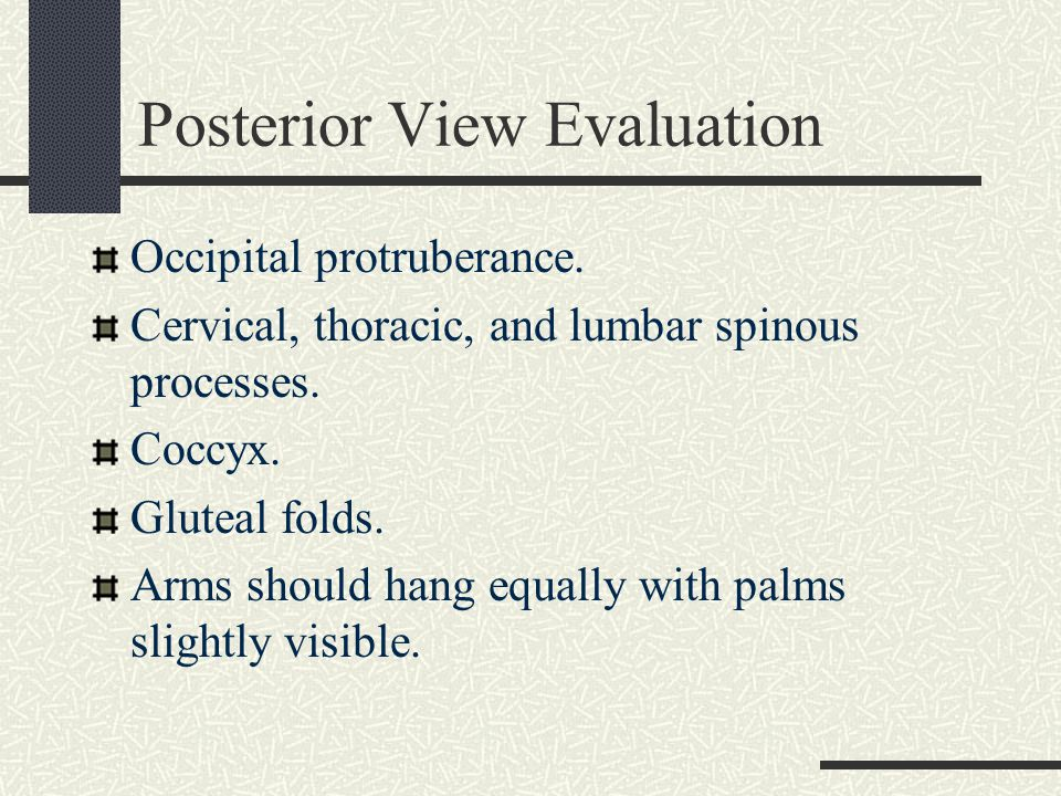 Posterior View Evaluation The space between the arms and sides of the body should be equal.