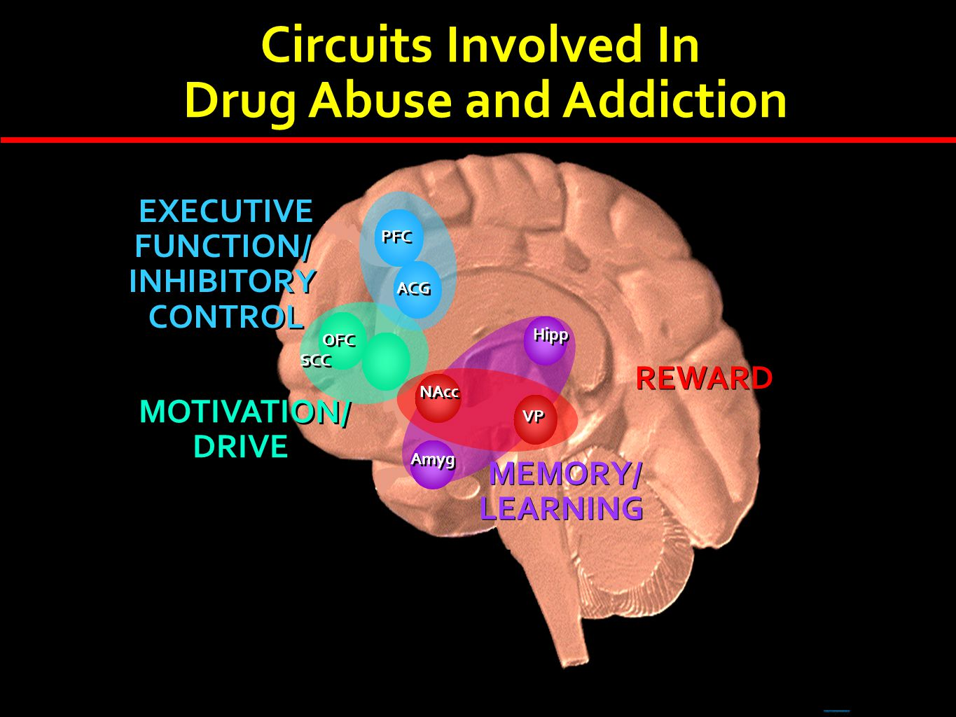 OFC SCC MOTIVATION/ DRIVE MOTIVATION/ DRIVE Hipp Amyg MEMORY/ LEARNING MEMORY/ LEARNING Circuits Involved In Drug Abuse and Addiction Circuits Involve