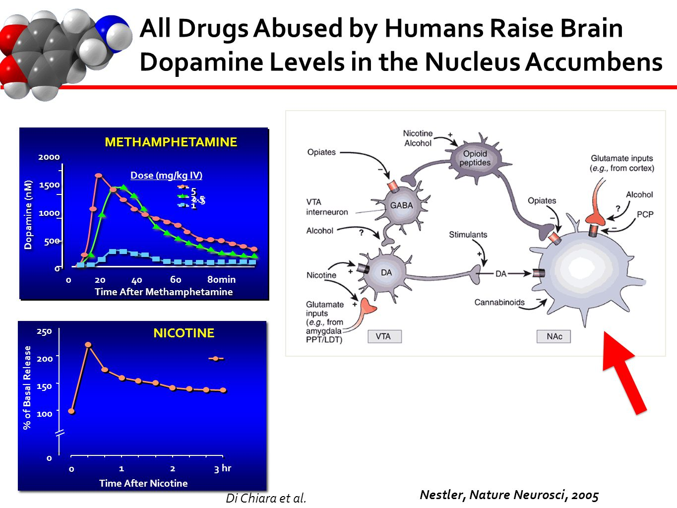 All Drugs Abused by Humans Raise Brain Dopamine Levels in the Nucleus Accumbens Nestler, Nature Neurosci, 2005 ` ` Time After Methamphetamine Dopamine