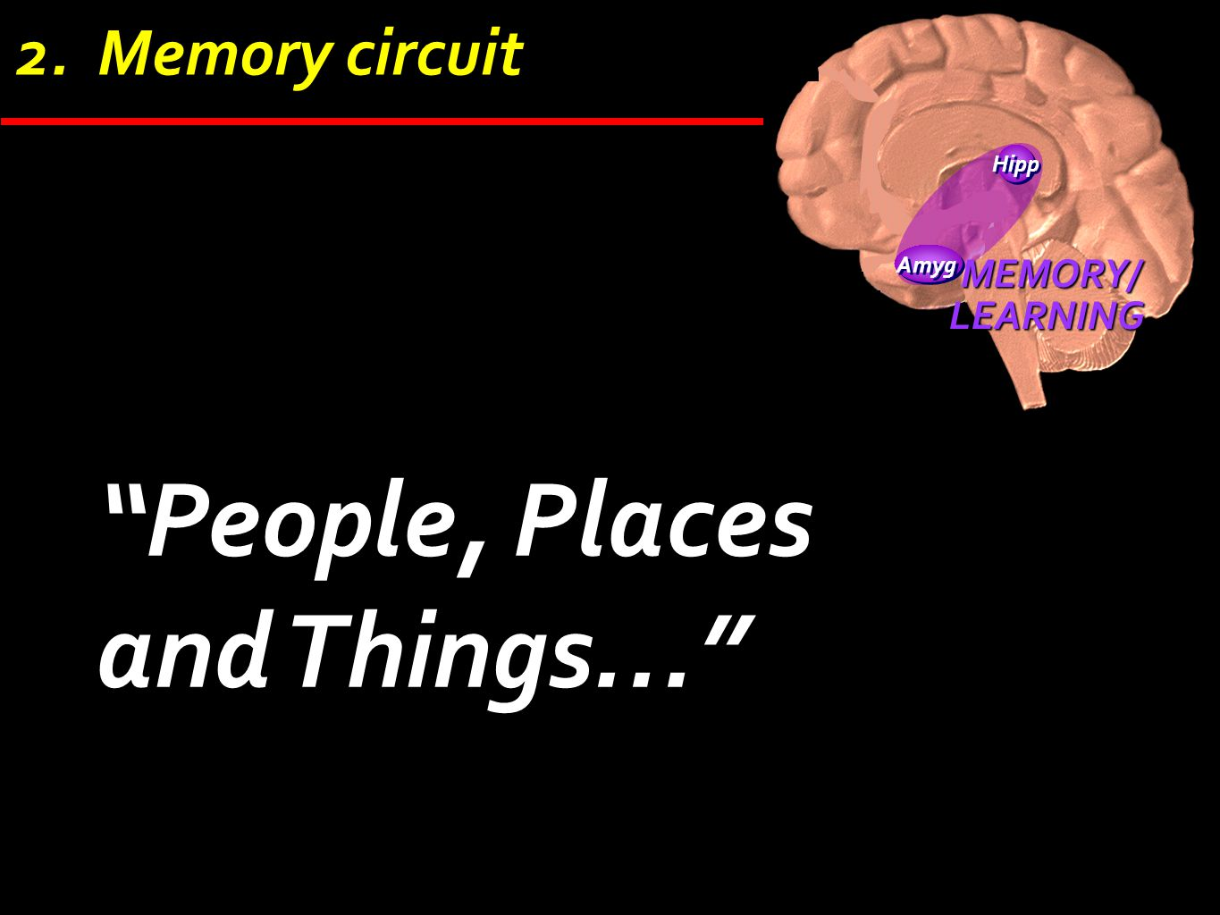 """Hipp Amyg MEMORY/LEARNING 2. Memory circuit """"People, Places and Things…"""""""