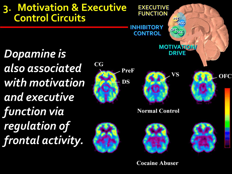 3.Motivation & Executive Control Circuits ACG OFC SCC INHIBITORY CONTROL INHIBITORY CONTROL EXECUTIVE FUNCTION EXECUTIVE FUNCTION PFC MOTIVATION/ DRIV