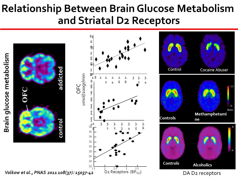 Controls Methamphetami ne Abusers OFC umol/100gr/min 4 0 Controls Alcoholics control addicted Brain glucose metabolism Control Cocaine Abuser DA D2 re