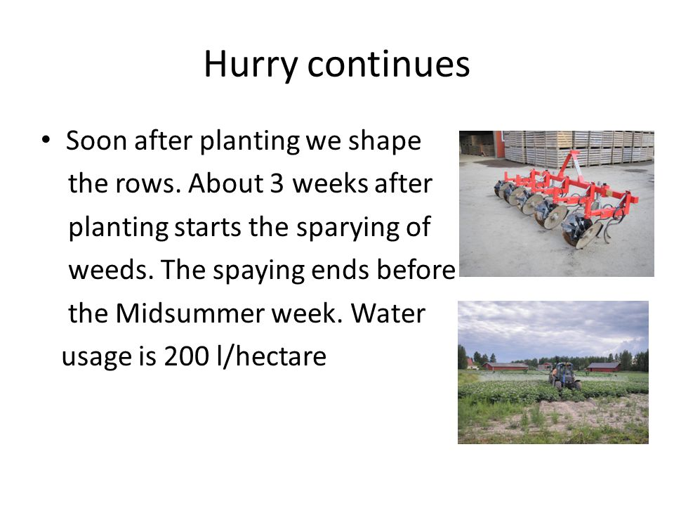 Hurry continues Soon after planting we shape the rows.