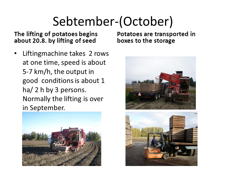 Sebtember-(October) The lifting of potatoes begins about 20.8.