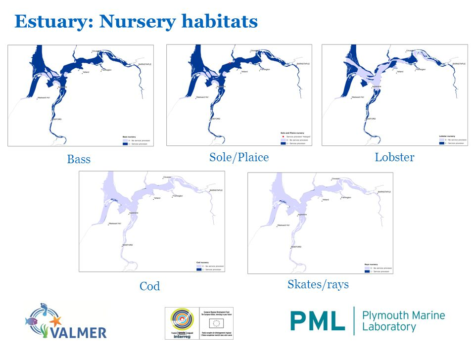 Estuary: Nursery habitats Bass LobsterSole/Plaice Cod Skates/rays
