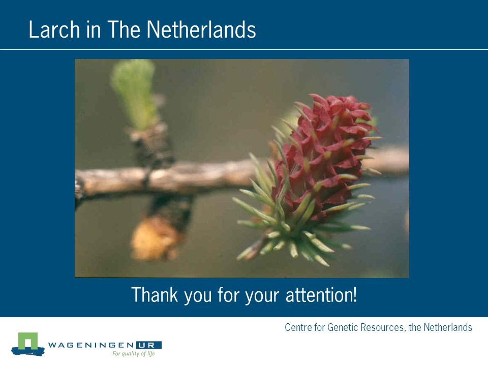 Centre for Genetic Resources, the Netherlands Larch in The Netherlands Thank you for your attention!