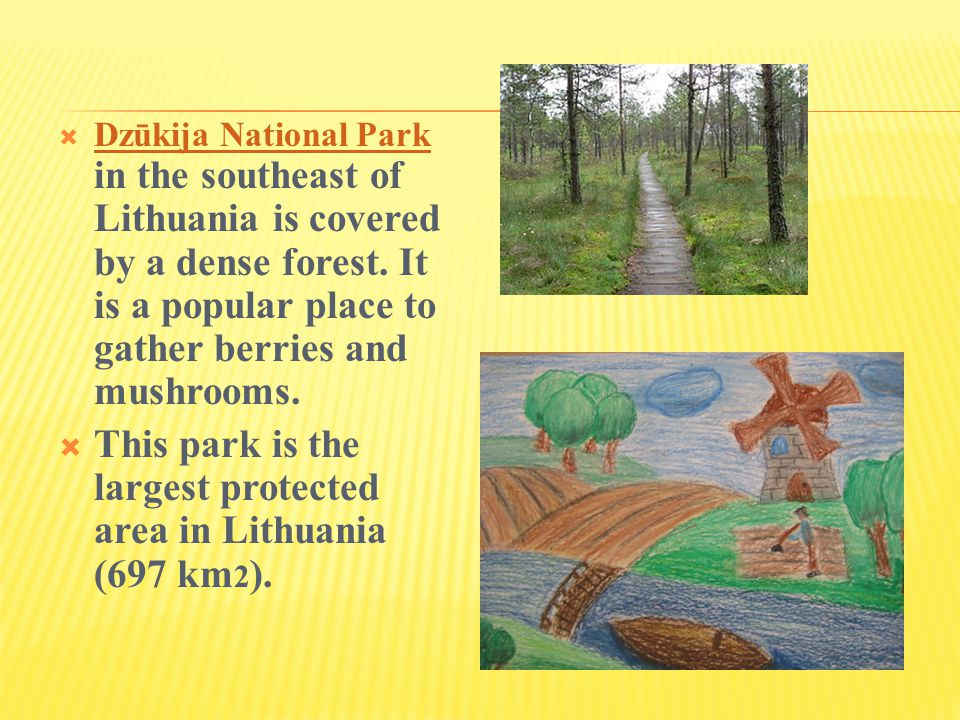  Dzūkija National Park in the southeast of Lithuania is covered by a dense forest.