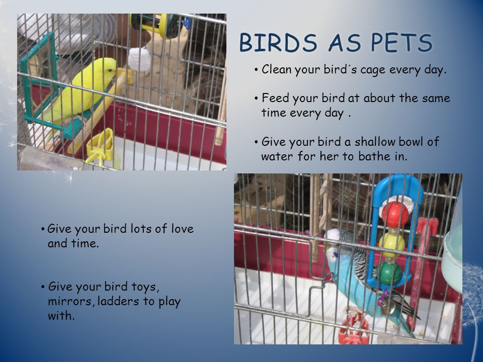 BIRDS AS PETS BIRDS AS PETS Clean your bird´s cage every day.
